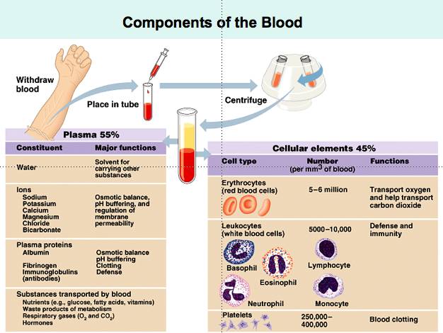 The Human Body: Blood Unit | Taught By Grace