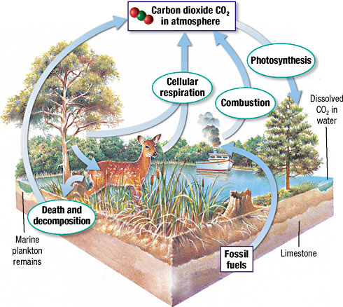 Ecosystems: Interactions, Energy, and Dynamics HS-LS2 - Mrs. McIntosh ...