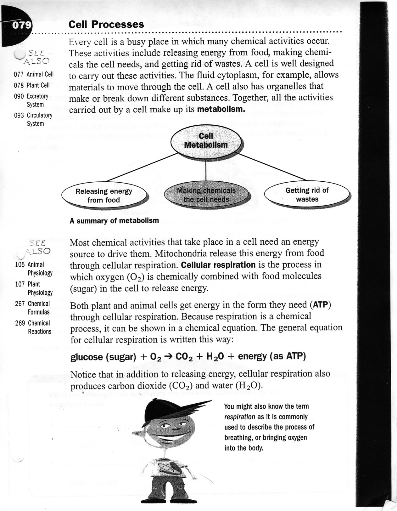 Uncategorized Cellular Respiration Worksheet Middle School life science cell processes worksheet